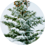 Cut your own Christmas Tree at Pell Family Farm