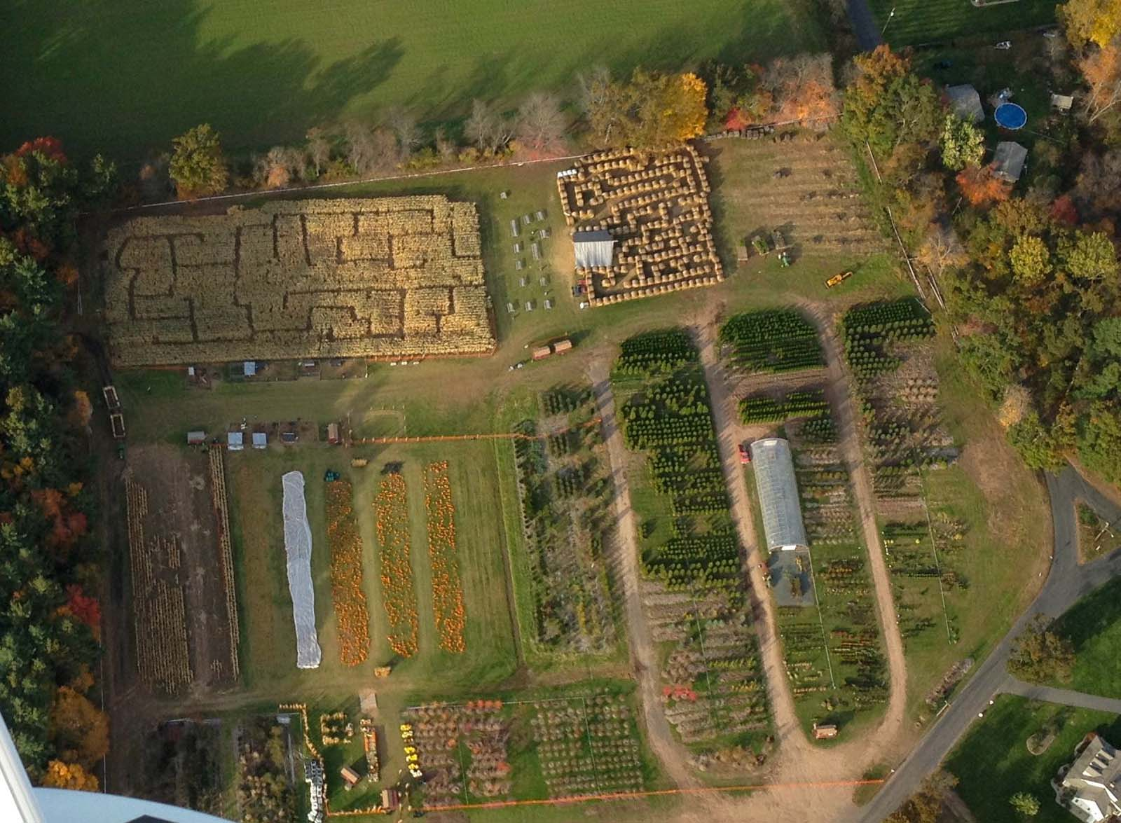 Arial View of Pumpkins