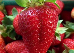 Juicy Close Up Strawberry